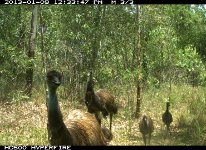 Hotspots camera traps picked up an important family sighting!
