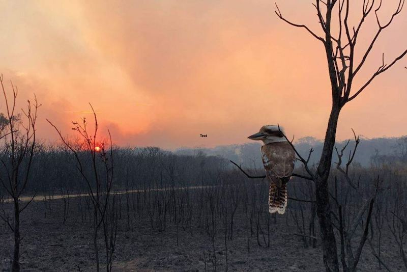 NSW Bushfire Inquiry Update
