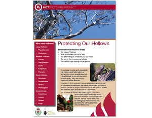 Protecting Our Hollows: fact sheet